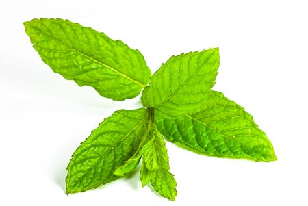 sprig: leaf of mint isolated Stock Photo