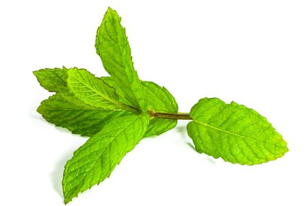 leaf of mint isolated Stock Photo - 5152039