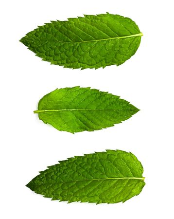mint leaf isolated photo