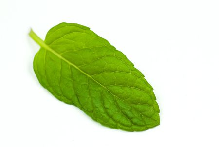 mint leaf isolated Stock Photo - 5228702
