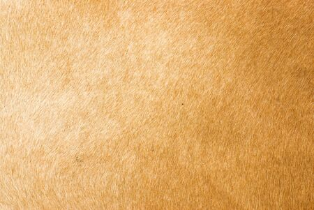 cow skin: leather texture