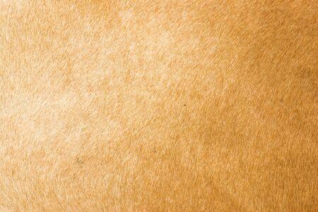 leather texture Stock Photo - 8073518