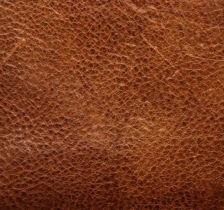 cuero vaca: textura de la piel