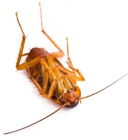 cockroach Stock Photo - 8073289
