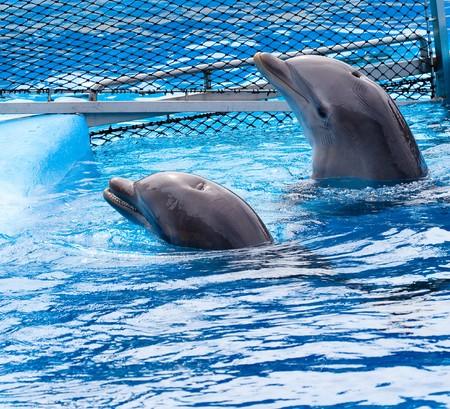 dolphins Stock Photo - 7982221