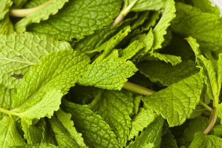 mint leafs photo