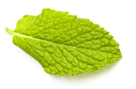 mint leafs isolated on a white background Stock Photo - 8194946