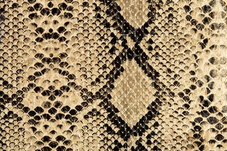 snake texture photo