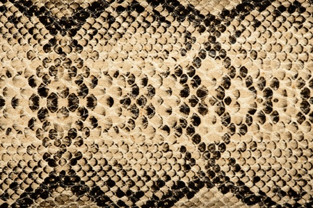 skin structure: snake texture