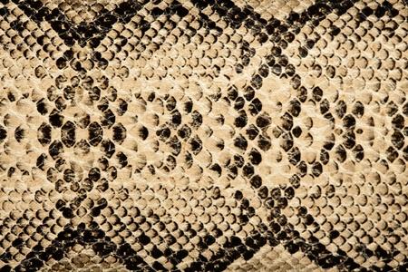 snake skin pattern: snake texture
