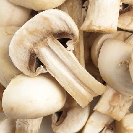 mushroom pile photo