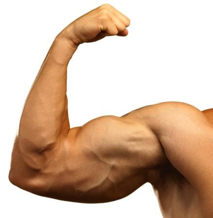 hombre fuerte: bíceps fuerte sobre un fondo blanco Foto de archivo
