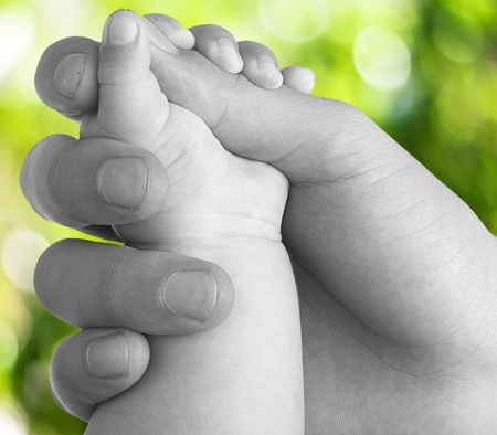 holding mother's hand: adult hand holding a baby hand closeup, black and white