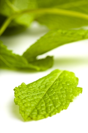 extreme closeup of mint leafs on whtie background photo