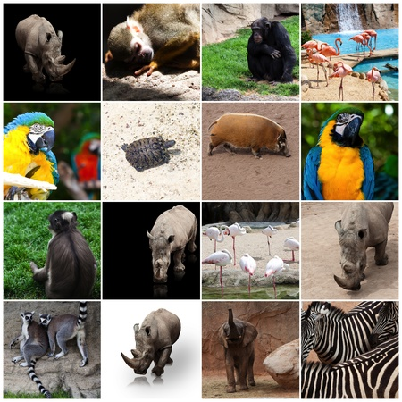 group of pictures of different animals photo