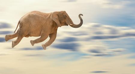 elefant: Fliegende Elefant, Outdoor