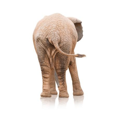 Portrait Of An Elephant On White Background photo