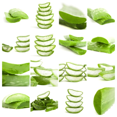 Set Of Aloe Isolated On White Background photo