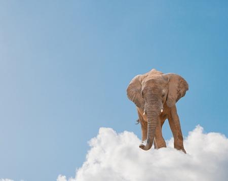 imaginacion: Elefante en la nube en cielo, al aire libre Foto de archivo