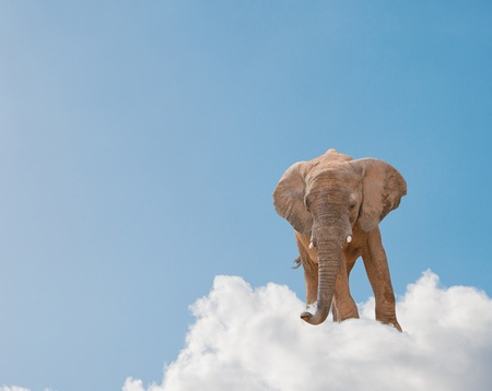 Elephant On Cloud In Sky, Outdoor Imagens
