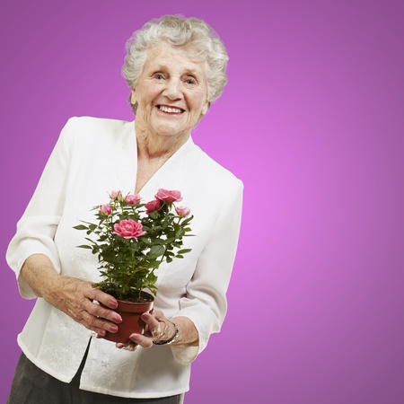 senior woman holding a flower pot against a pink background photo