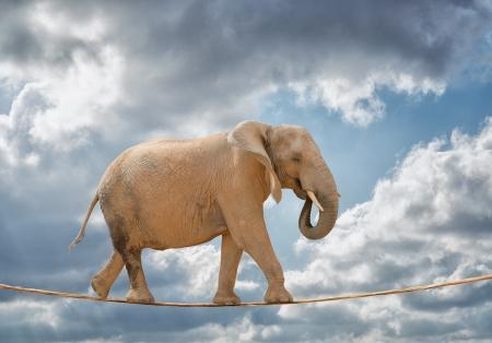 Elephant Walking On Rope, Outdoors Standard-Bild