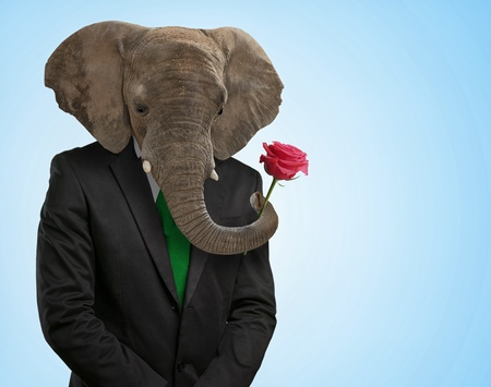 single rose: Portrait Of Man With Animal Head On Blue Background