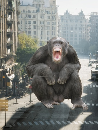 Angry Monkey Sitting On Road, Outdoors Stock Photo - 16682113