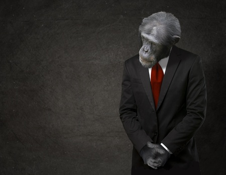 gorilla: Business Monkey In Formal Attire On Black Background Stock Photo