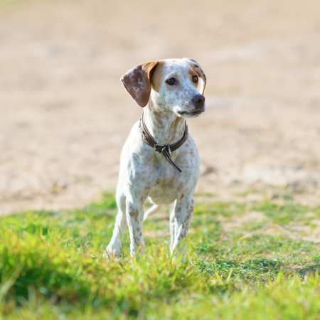 stray dog: Portrait Of Homelessness Sad Dog