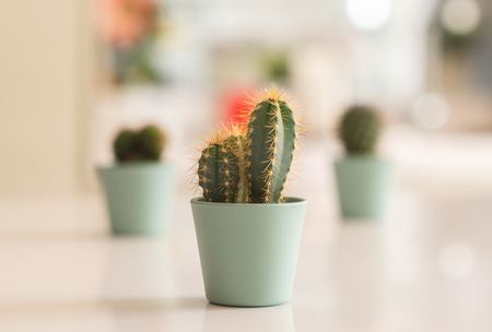 Beautiful cactus plants at home Stock Photo