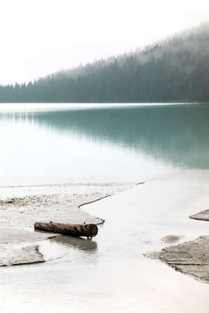 Thick fog, motionless blue water and a dark pine forest are the backdrop for a lone fallen tree on the soft, muddy shores of Lake Louise in Alberta, Canada, during a cold Fall morning. Stock Photo