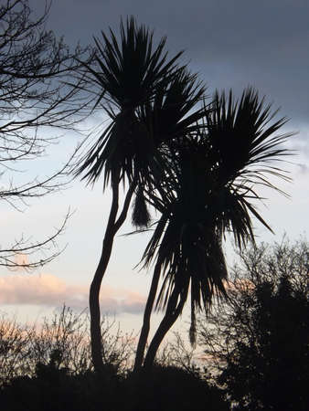 guernsey: Guernsey Palm Trees