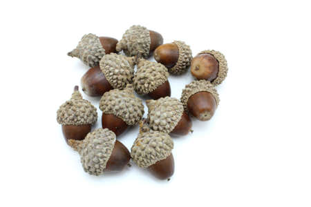 fale: Autumn browns acorns close up  isolated on a white background