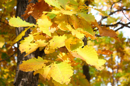 Beautiful autumn time, yellow and red leaves on trees. Stock Photo - 8079273