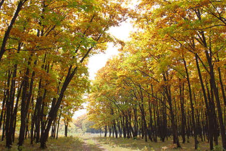 Beautiful autumn time, yellow and red leaves on trees. Stock Photo - 8079232