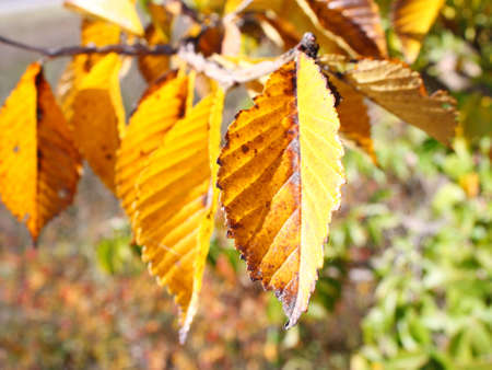Beautiful autumn time, yellow and red leaves on trees. Stock Photo - 8079800