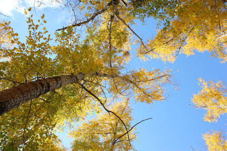 Beautiful autumn time, yellow and red leaves on trees. Stock Photo - 8079228
