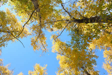 Beautiful autumn time, yellow and red leaves on trees. Stock Photo - 8079231