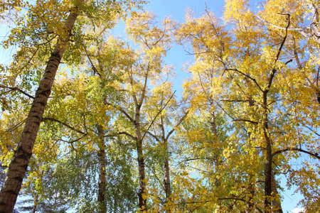 Beautiful autumn time, yellow and red leaves on trees. Stock Photo - 8079236