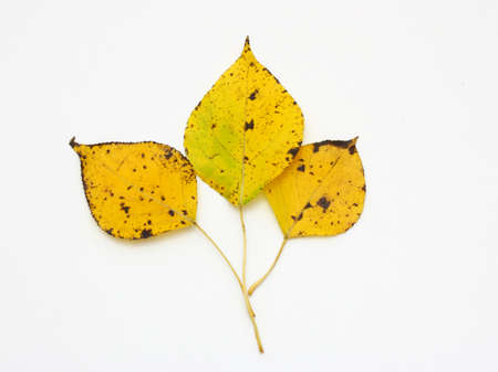 collection beautiful colorful autumn leaves isolated on white background photo