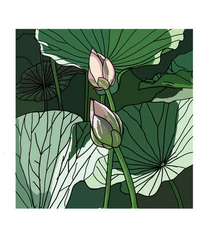 Realistic Oriental lotus - a flower illustration. Vetores