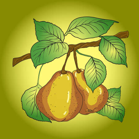 tempting: Two mature yellow pears with leaves on a branch.
