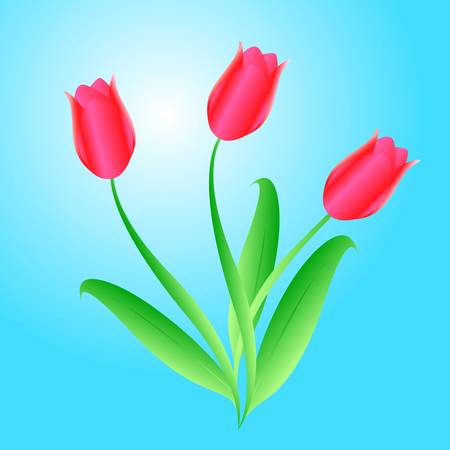 bouquet from three beautiful tulips Vector