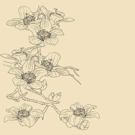 tierno: licitaci�n orqu�deas floreciente rama sobre un fondo claro