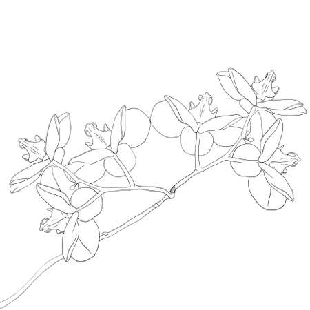 clip art draw: orchid flower on white background Illustration