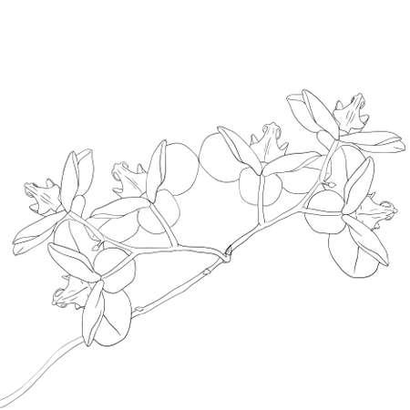 flower clip art: orchid flower on white background Illustration