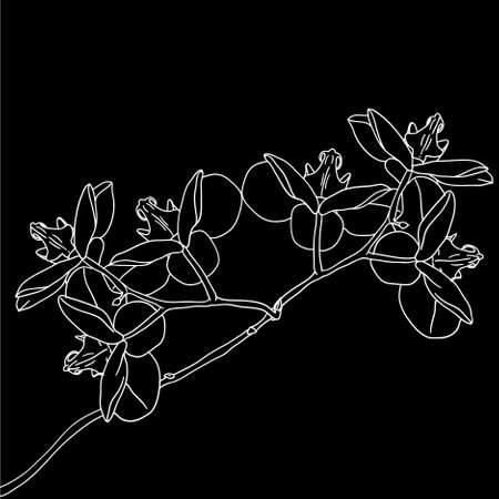 orchid isolated: Stylized orchid branch design , vector illustration Illustration