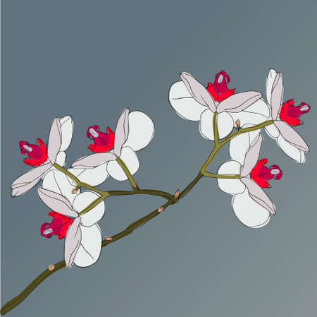 twig blossoming orchids on a background Illustration