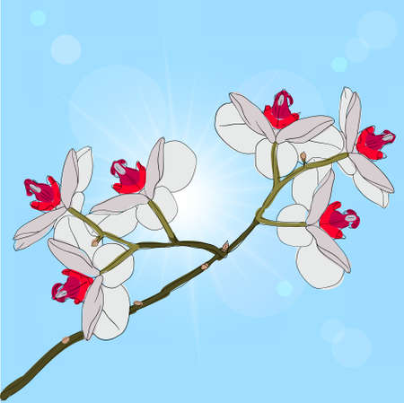 twig blossoming orchids on a background Stock Vector - 9128355